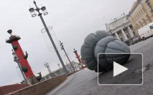 В Петербурге ураган сорвал часть кровли Петропавловки и свалил новогоднюю ёлку
