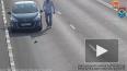 Спаситель калининградского котейки сделал двухкилометровый ...