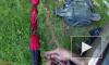 В Ленобласти спасли кота, просидевшего на дереве несколько суток
