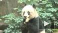В Гонконге умерла старейшая в мире панда