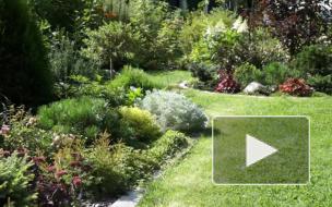 Зелёный сад в Лебяжьем