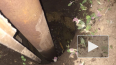 В Хабаровском крае пропавшего 2-летнего малыша нашли ...