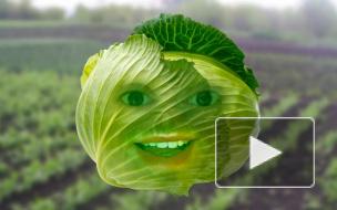 Говорящие овощи про воров, прыгунов, лазунов и электрунов