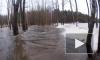 Серфер решил прокатиться по затопленному лесу в Ленобласти
