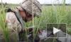 Украина и ЛНР отводят войска в районе Золотого
