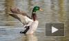 Смольный просят сообщать о перелетных птицах, оставшихся без еды из-за снегопада
