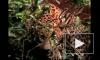 В Индии леопарда спасли из ловушки