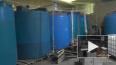 В Металлострое обнаружили 168 тонн контрафактного ...