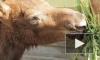Горе-зоозащитники отняли лосят у матери и смертельно отравили их