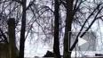 В Смоленске появились собаки экстремалы, которые гуляют ...