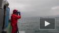 Пограничники спасли из холодной воды рыбаков, которых ...