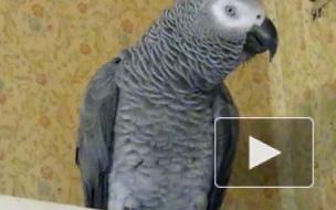 Попугаи предпочитают Кока-Колу