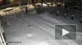 Опубликовано видео падения дерева на мужчину в Пскове