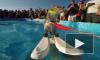 Белка Твигги стала мировой звездой, прокатившись на водных лыжах. Видео вызвало восторг пользователей