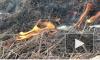 Видео: пожарная охрана ликвидировала возгорание сухой травы напротив Выборгского судостроительного завода