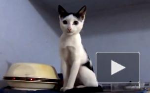 Врач Комаровский рассказал об опасности кошачьих царапин