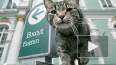 Эрмитаж раздает служебных котов