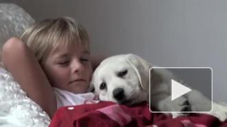 милый щенок лабрадора и девочка