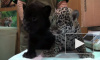 В Петербурге плодятся даже ягуары. Три котенка родились вместе с весной