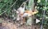Видео: нападение паука на лягушку вызвало истерику у жителя США