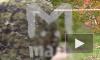 Первые подробности и видео: В Подмосковье убита следователь по особо важным делам