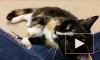 Кошки привязываются к хозяевам больше, чем собаки