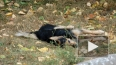 В Никольском саду продолжают травить собак
