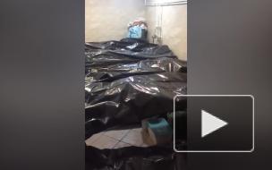 Минздрав объяснил видео из переполненного телами морга в Новокузнецке