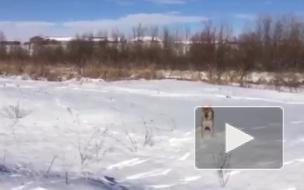 """""""Это фиаско, братан"""": Видеоролик с собакой набирает популярность в интернете"""