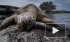 Выяснилось, почему морские черепахи едят грязный пластик в океане