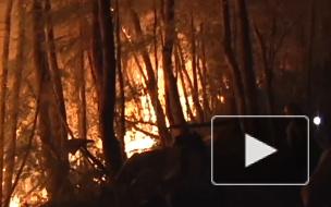 Росгидромет спрогнозировал ухудшение ситуации с лесными пожарами
