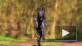 Более 600 бродячих собак кастрировали за полгода 2017 го...