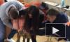 """""""Дом-2"""": свежие серии — мать Рапунцель избила двоих, жена Глеба напала на Кальметову, Артемова на Сейшелах"""