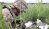 Украинские бойцы случайно уничтожили позиции своих войск в Донбассе
