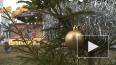 Петербуржцы отмечают Рождество в Петропавловской крепост...