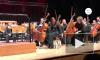 Видео из Стамбула: Бездомная кошка вышла на сцену во время выступления оркестра
