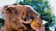 Репортаж из центра Велес: тысячи спасенных диких животны...
