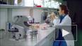 Малорослость бактерий связали с высокой устойчивостью ...