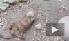 Зоологи рассказали, зачем выдры жонглируют камешками