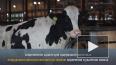 """Видео: в сельхозпредприятии """"Смена"""" открылся новый ..."""