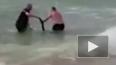 Чудесное спасение тонущего кенгуренка попало на видео