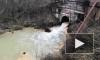 Экоактивисты нашли опасную концентрацию фосфора в ручье Верховском