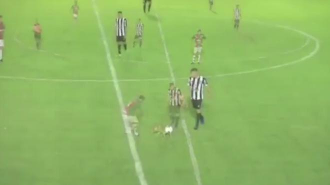 Курьезное видео из Аргентины: Собака прорвалась на поле и отобрала мяч у футболиста