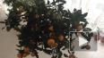 В Петербург из Аргентины пытались провезти мандарины-уби...
