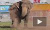 Слоны-трезвенники развлекают петербуржцев в Купчино
