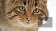 На Малой Садовой украли символ Петербурга — кошку ...