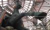 Как выглядит памятник Николаю I под строительными лесами: взгляд Piter.TV