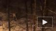 На проспекте Луначарского неадекватный мужчина ночью ...