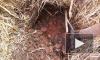 В лесу под Ростовом обнаружили тело двухлетнего ребенка