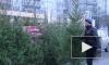 По пути из леса в Петербург живая ель дорожает в 150 раз